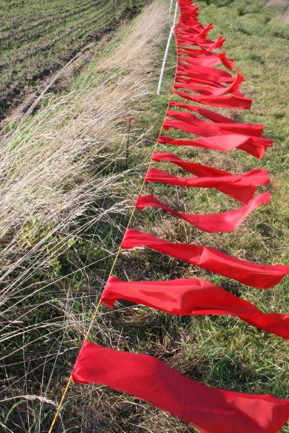 Raudonomis vėliavėlėmis ir elektriniu piemeniu aptverta ganykla Elektrėnų savivaldybėje. Andrejaus Gaidamavičiaus nuotr.